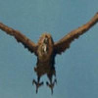 Giant Condor vs Chunk