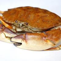 King Cobra vs Crab