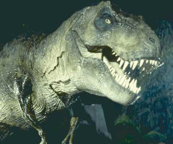 1000+ images about T-rex Drawing Reference on Pinterest ...