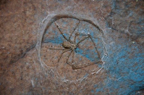 fungus_lampshade_spider