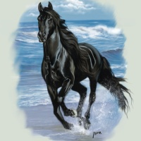 Black Beauty vs Spirit (Horse)