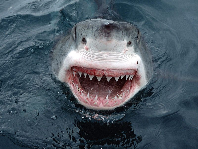 21183_Jaws4me